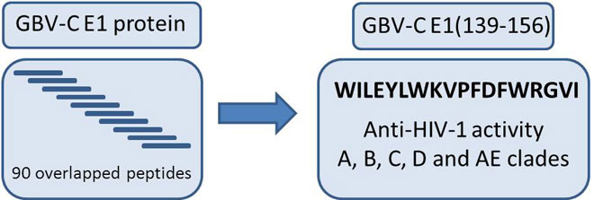 GB virus C E1 Protein as a New HIV-1 Entry Inhibitor. Global Medical Discovery