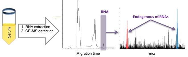 Direct detection of endogenous MicroRNAs and their post-transcriptional modifications in cancer serum bycapillary electrophoresis-mass spectrometry.. Global Medical Discovery