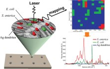 Label-free mapping of single bacterial cells using surface-enhanced Raman spectroscopy.. Global Medical Discovery