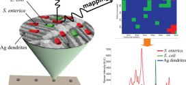 Label-free mapping of single bacterial cells using surface-enhanced Raman spectroscopy