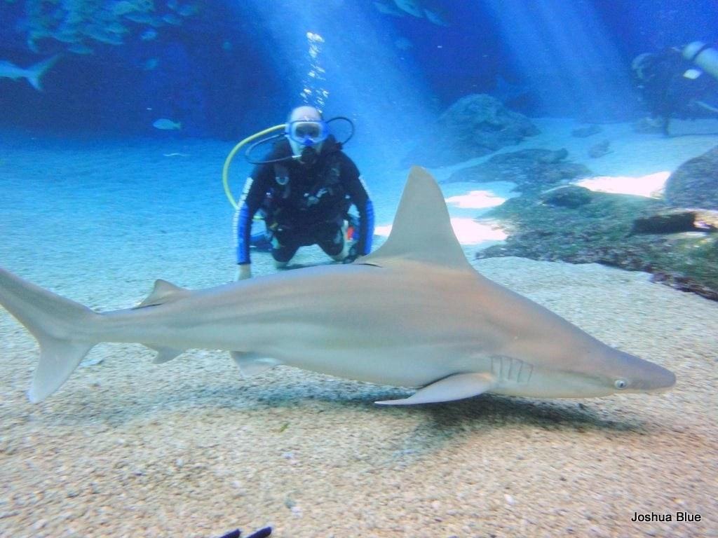 Shark_Dive_Maui_Ocean_Center_Josh_Blue