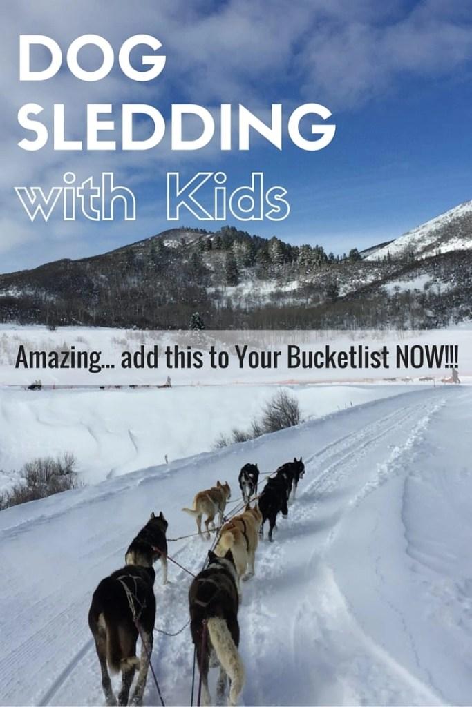 Reasons why you should go dog sledding | global munchkins