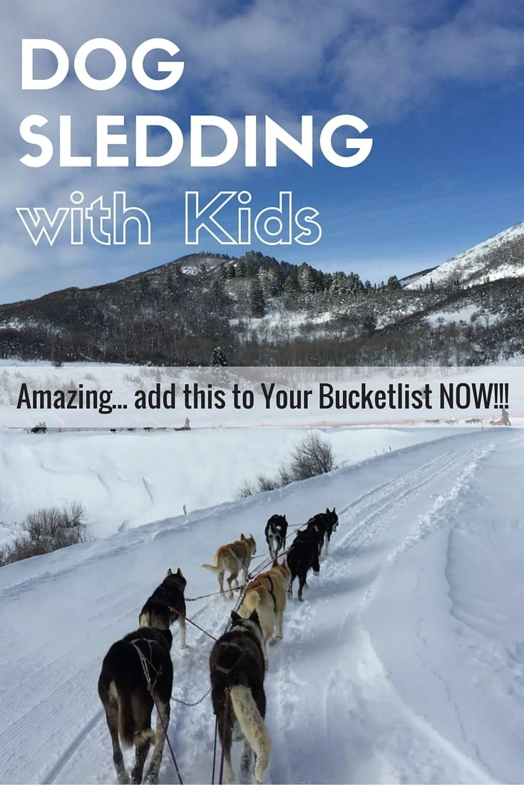 Want to know what its like to drive your own dog sled team? Dog Sledding in Colorado is a once in a lifetime experience. #dogsledding #coloradodogsledding