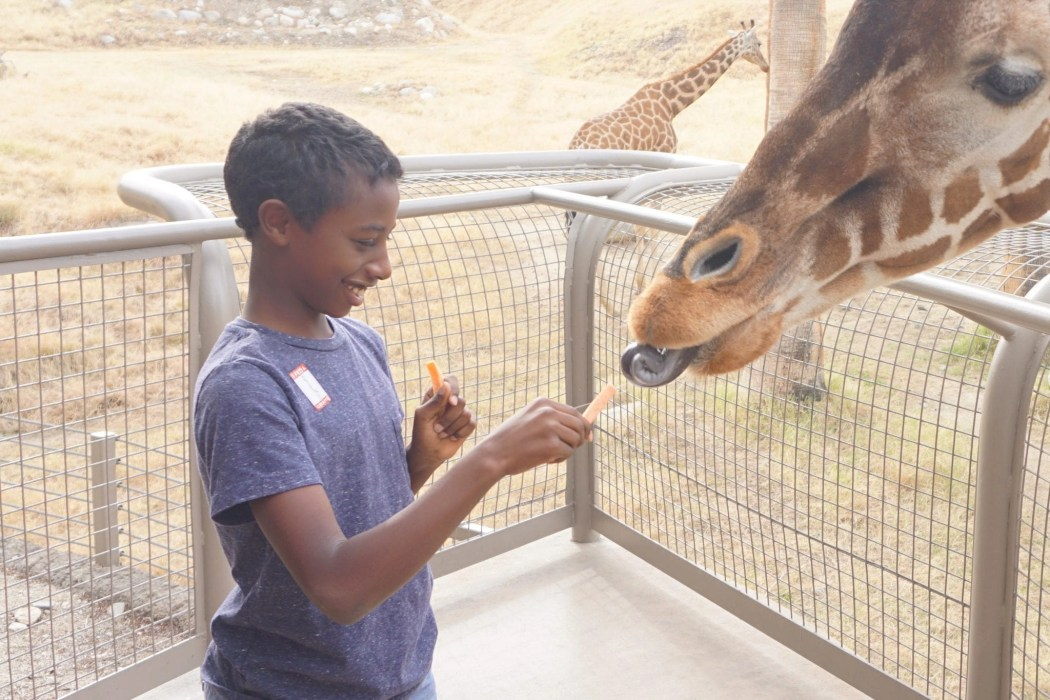 Living Desert Zoo | The Ultimate Guide to Palm Springs with Kids