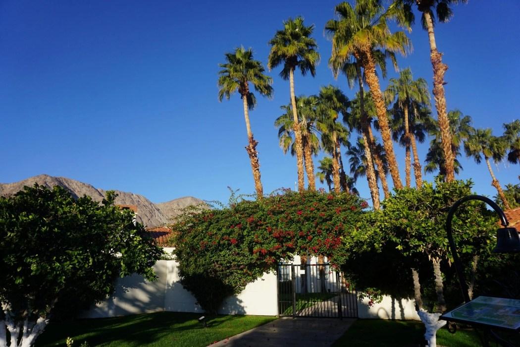 Palm Trees | La Quinta Resort | Palm Springs