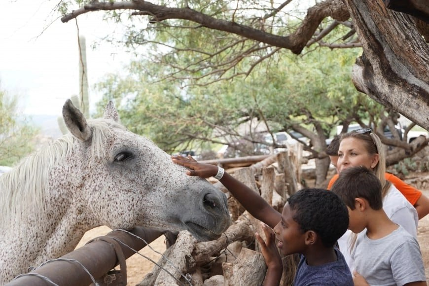 Petting a Horse | Things to do in Palm Springs | Global Munchkins