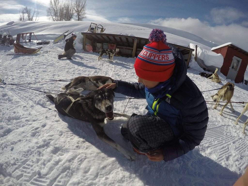 Alaskan Huskies Dog Sledding in CO | Global Munchkins