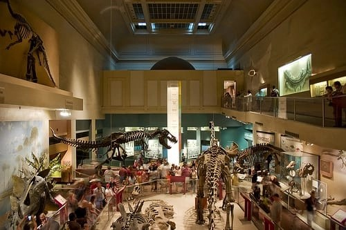 Natural_History_Museum_DC