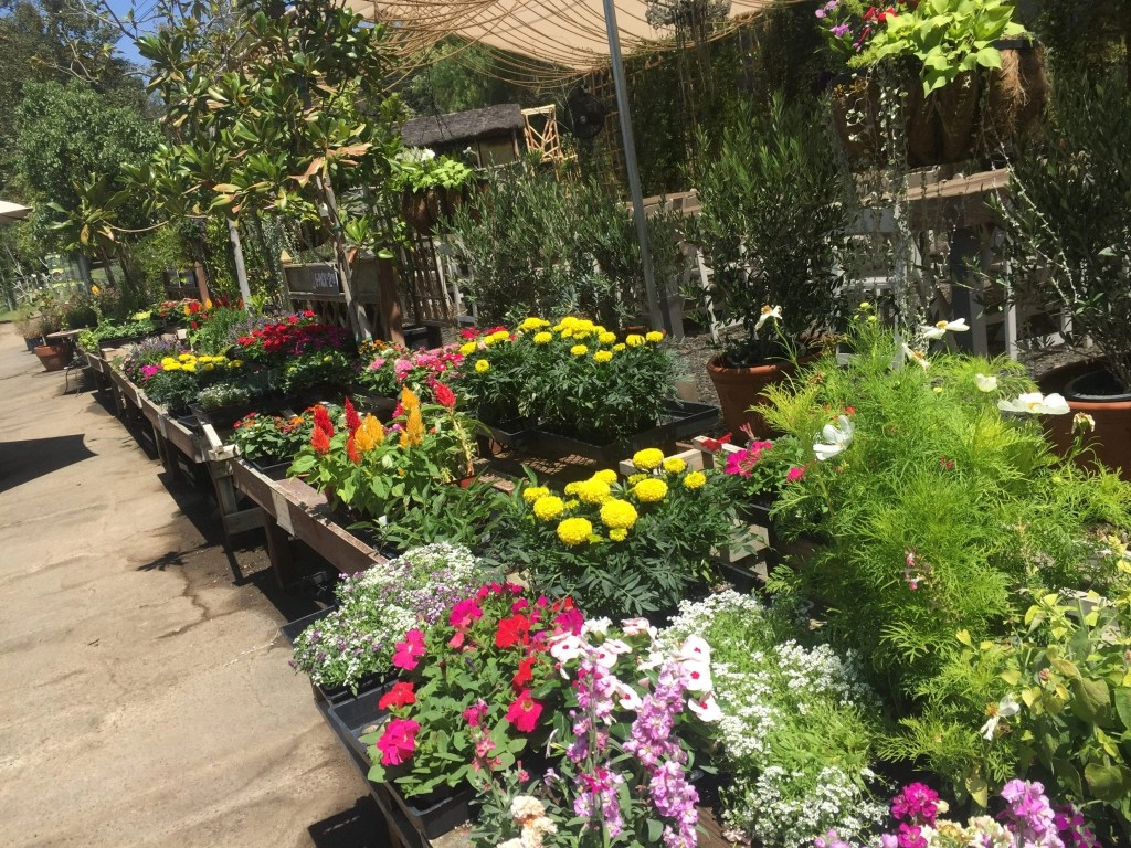 Beautiful nursery located at Myrtle Creek Botanical Gardens in Fallbrook CA | Global Munchkins
