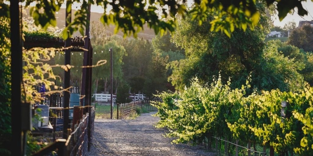 Peltzer Winery and Farm's Vineyard. The newest Temecula Winery | Global Munchkins
