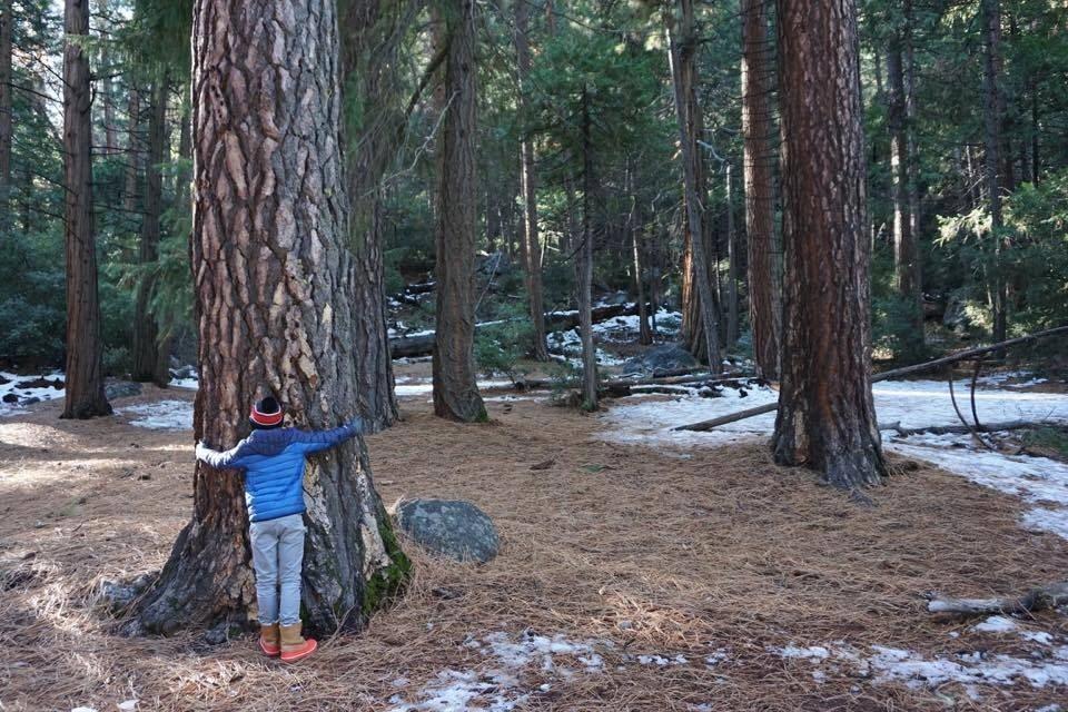 Sometimes you just need to hug a tree