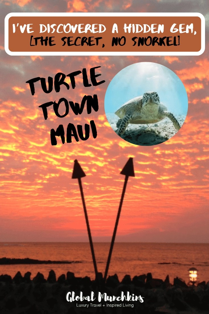 Have you ever witnessed wild sea turtles so close you could touch them? Well, at the secret spot I have discovered you can do just that. I like to call it Turtle Town Maui. #maui #turtle #seaturtle #traveldestination