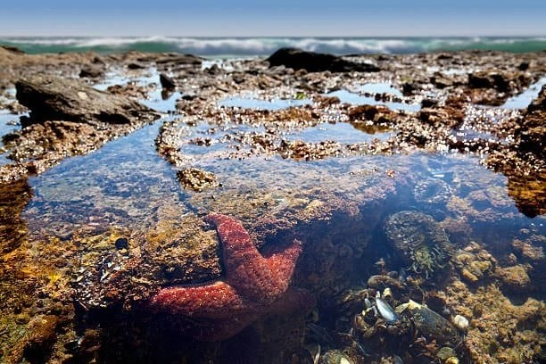 SD Tide Pools