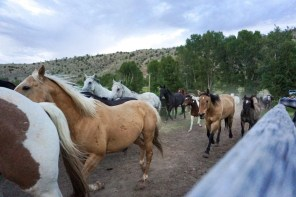 5 Reasons a Dude Ranch Vacation at The CM is AMAZING!