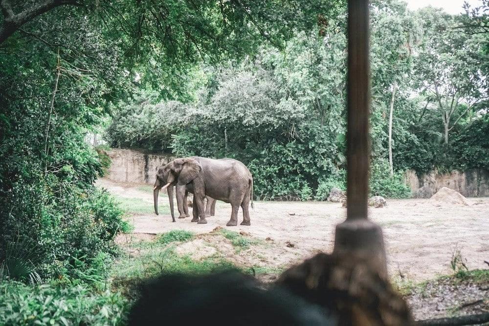 Disney World Tips - Morning Safari