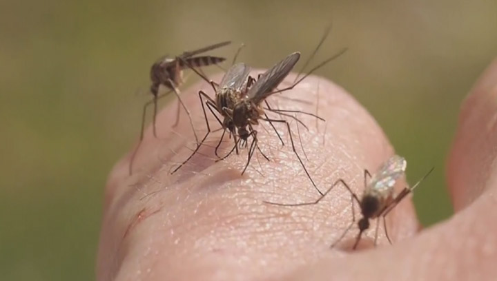More mosquitoes and blackflies? What a warm winter means ...