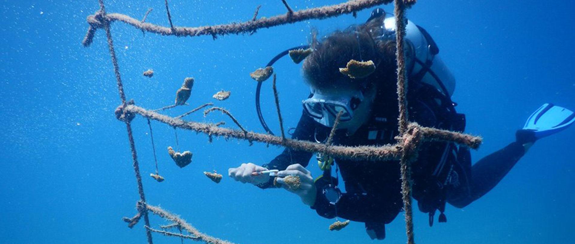 St Eustatius Caribbean Coral Reef Amp Marine Park