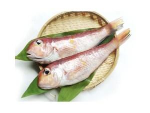 Amadai - Japanese Tilefish Image
