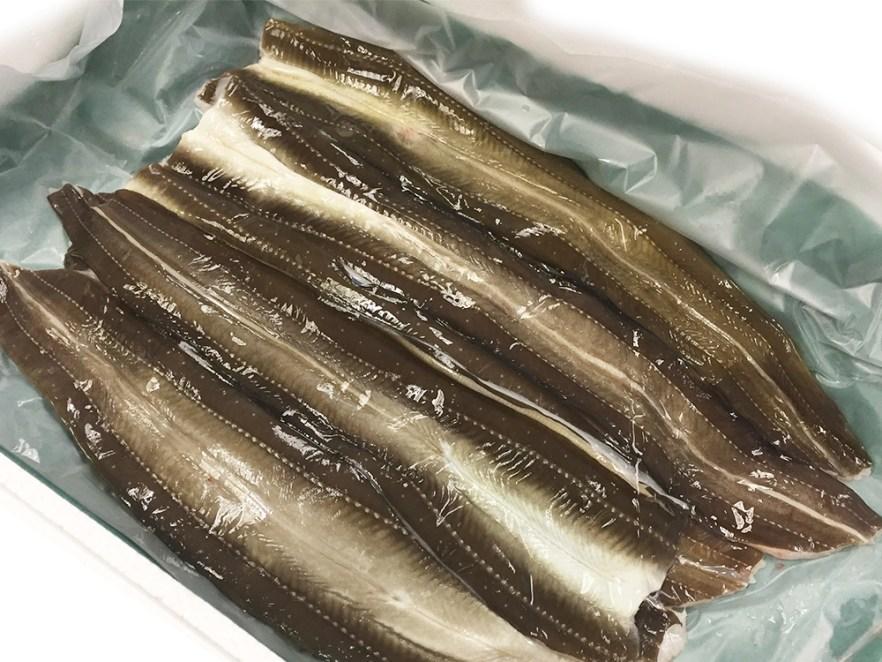 Anago Hiraki - Conger Eel Image