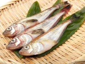 Hata Hata - Sailfin sandfish Image