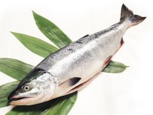 Sake - Salmon Image
