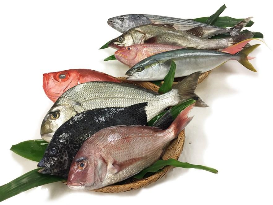 Omakase Fish Box - Custom Image