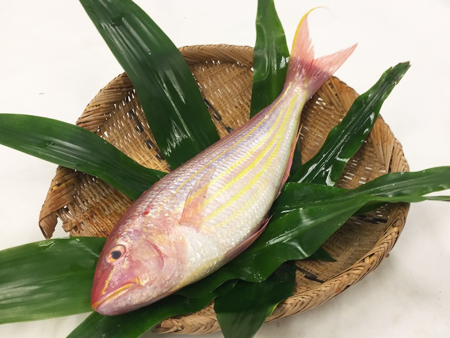 Itoyori - Threadfin bream Image