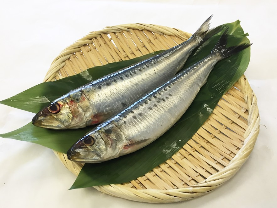 Iwashi - Sardin Image