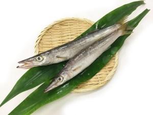 Kamasu - Japanese Barracuda Image
