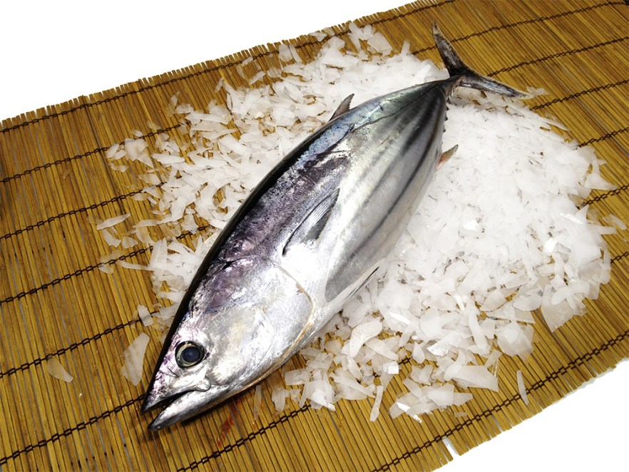 Katsuo - Bonito Image