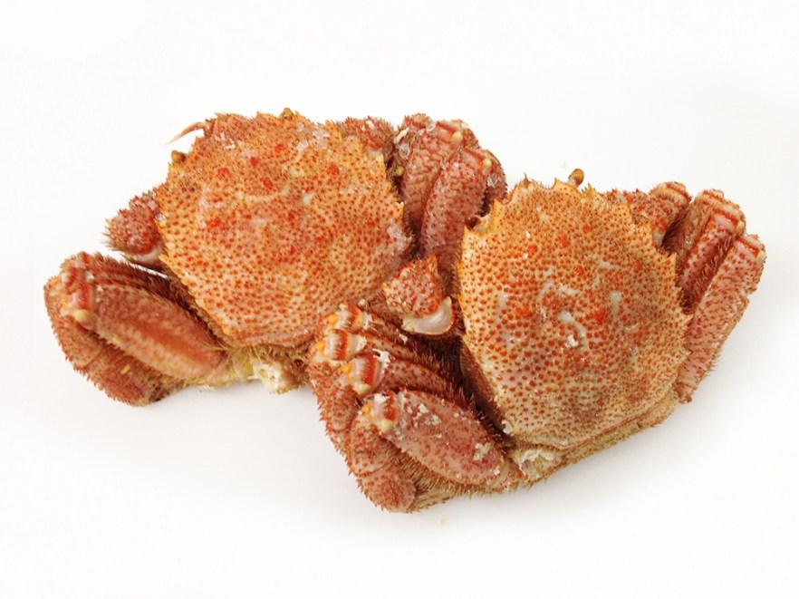 Kegani - Horse Hear Crab Image