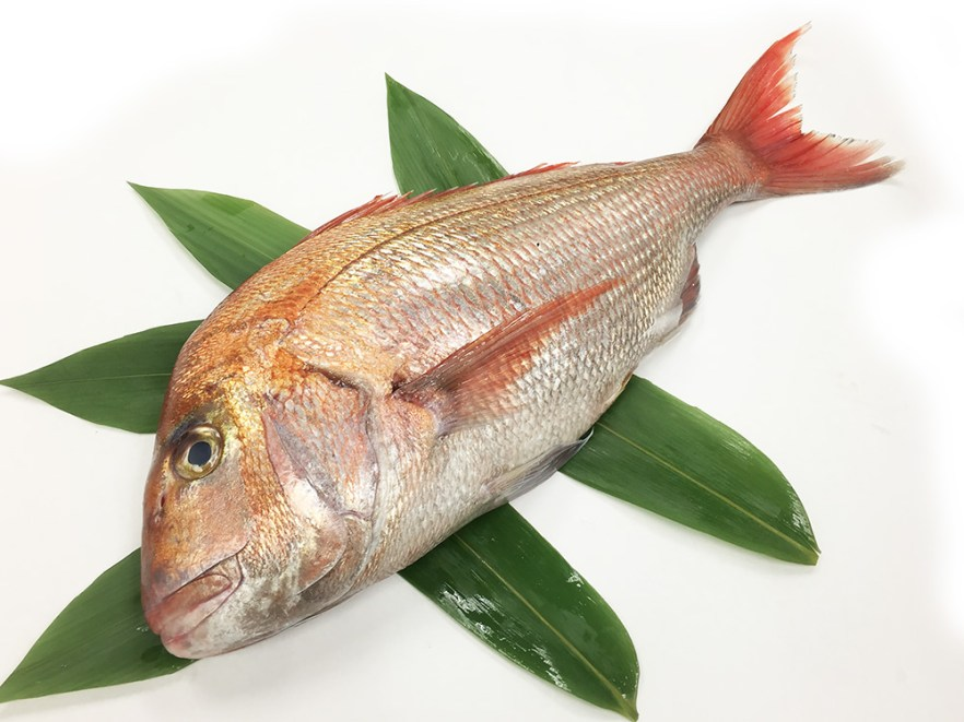 Madai (Wild) ‐ Red sea bream Image