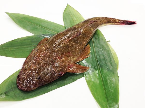 Magochi - Flat head Image