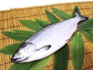 Masunosuke - King salmon Image