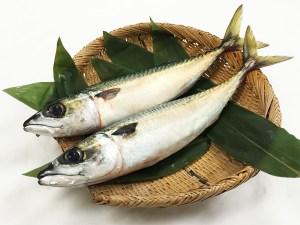 Saba - Mackerel Image