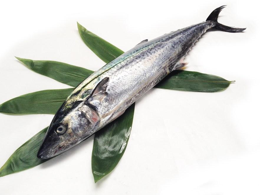 Sawara - Spanish mackerel Image