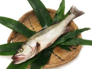 Suzuki - Japanese sea bass Image