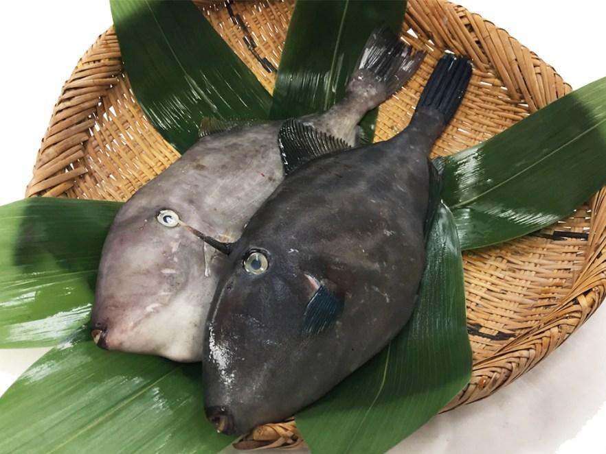 Umazurahagi - Black scraper Image