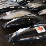 Bincho Maguro - Albacore Tuna