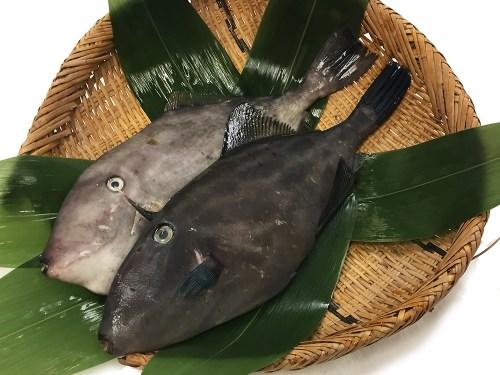 Umazurahagi