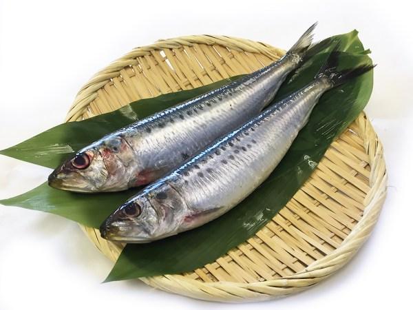 Iwashi - Sardin