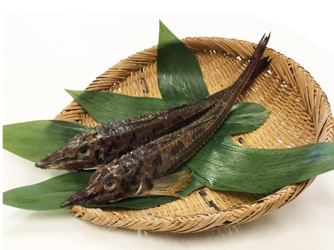 Hakkaku – Sailfin Poacher
