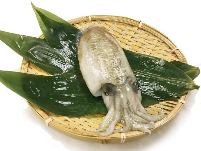Sumi-Ika - Cuttlefish