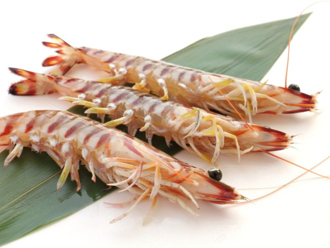 Kuruma Ebi - Japanese tiger prawn