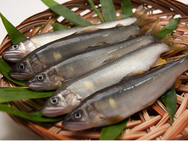 Ayu - Sweetfish