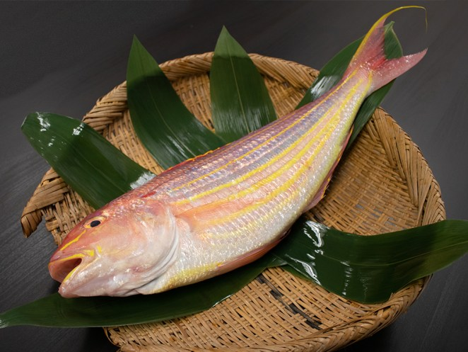 ITOYORI – Threadfin bream