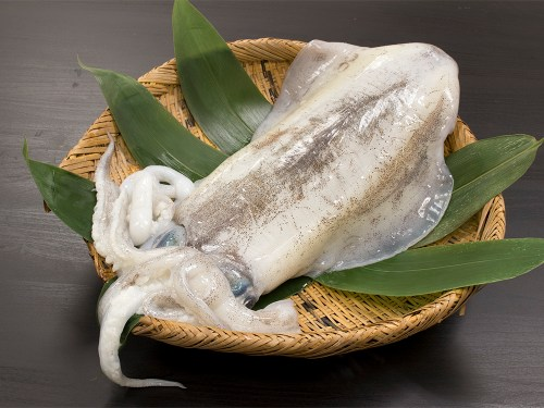 AORI-IKA - Bigfin reef squid