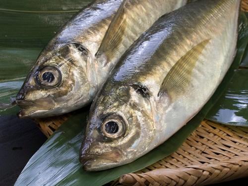 Aji Horse mackerel