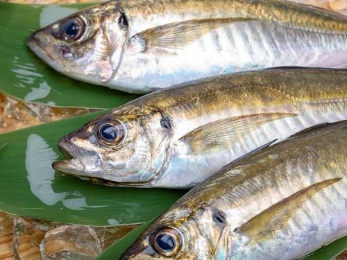 GON-AJI - Horse mackerel