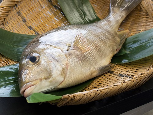 MEICHIADAI – Gray Large-eye bream